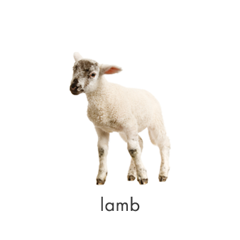 lamb-ziakas-family